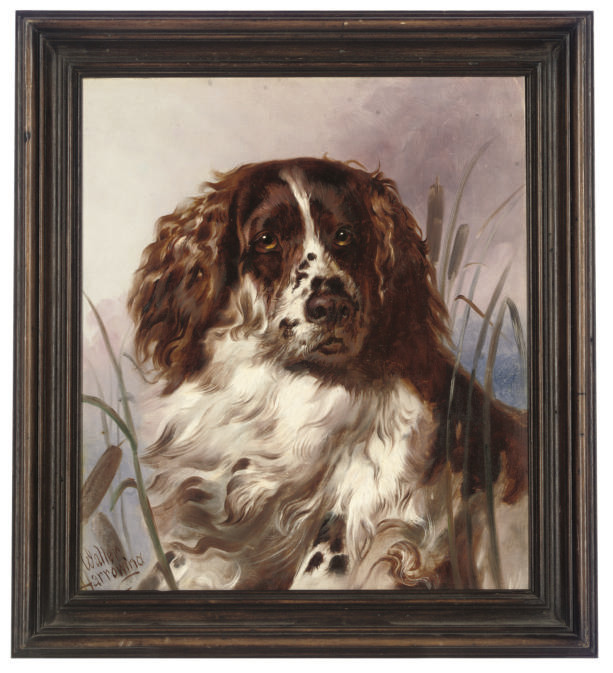 A faithful spaniel