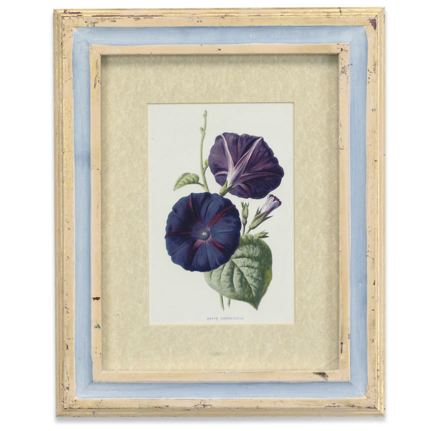 A COLLECTION OF TWELVE LITHOGRAPH PRINTS OF BOTANICAL INTEREST