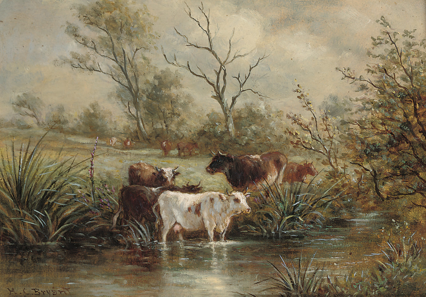 Cattle watering; and Cattle grazing on a river bank