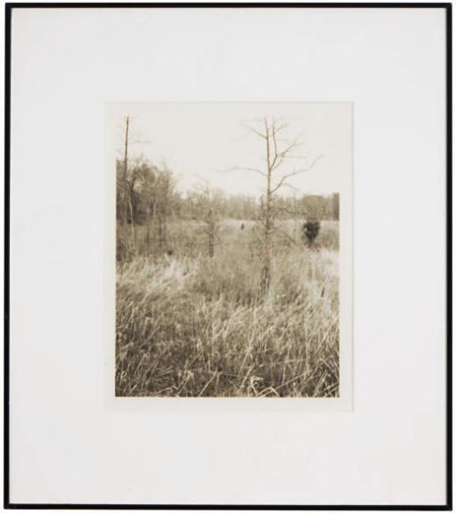 Plain Fields, 1981