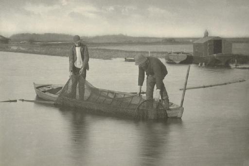 Taking up the Eel Net, c. 1896