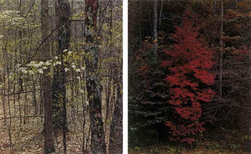 Trees, 1958-1975