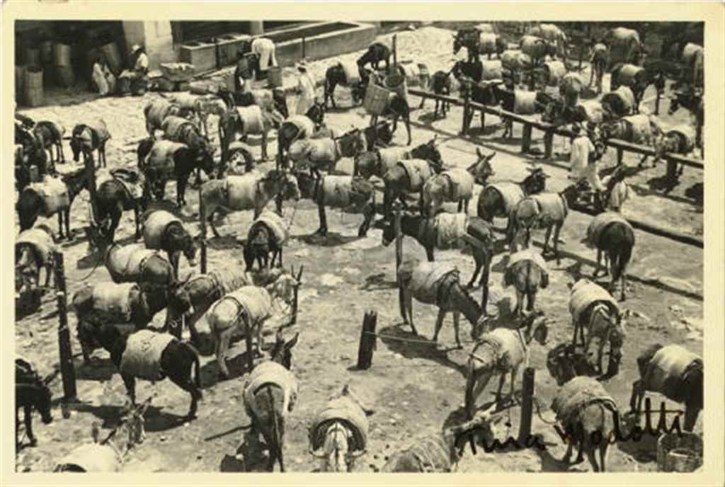 Untitled (Burros), c. 1929