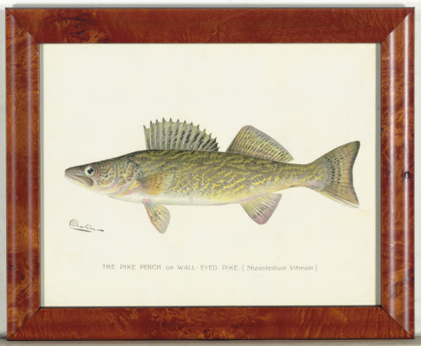 Annual Report of the Commissioners of Fisheries, Game and Forests of the State of New York: Eight Plates