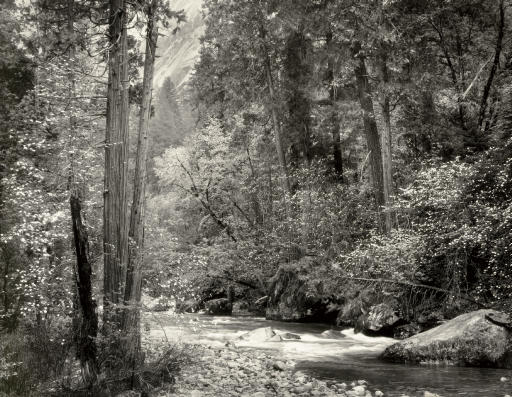 Tenaya Creek, Dogwood, Rain, Yosemite Valley, 1948
