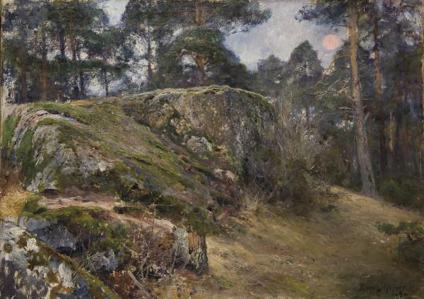 Rocher dans une forêt
