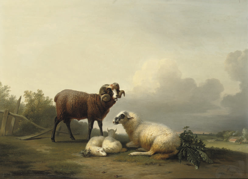 Sheep resting in the pasture