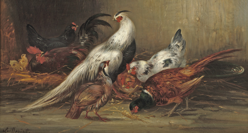 A feasant, chickens and other poultry