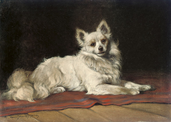 A papillon on a red rug