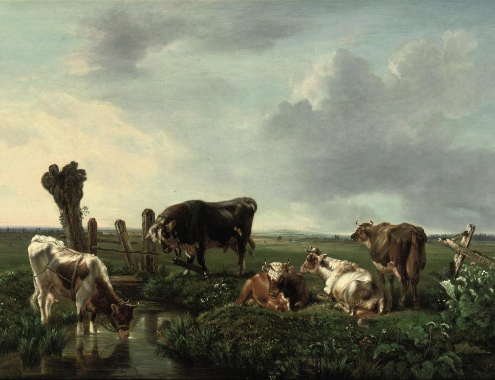 Cows resting near a stream