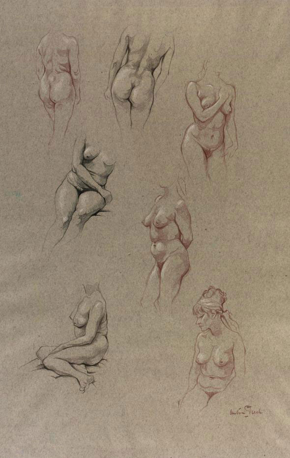 Study for female nudes