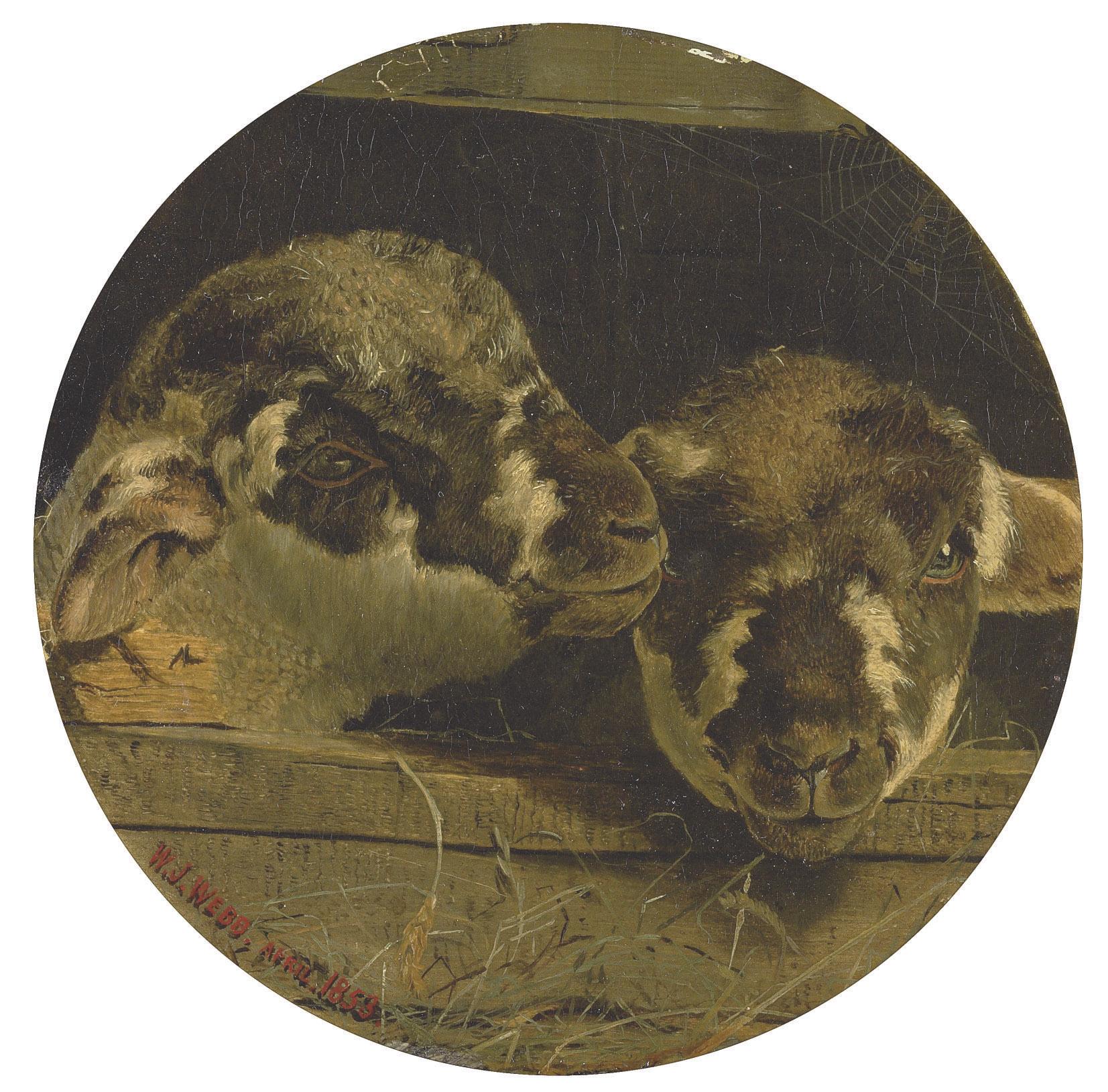 Two lambs in a barn