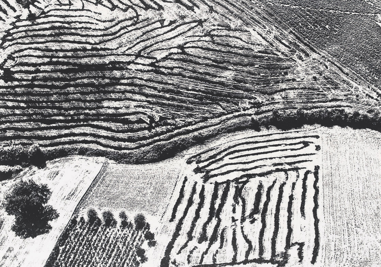 Landscape, 1955-1980
