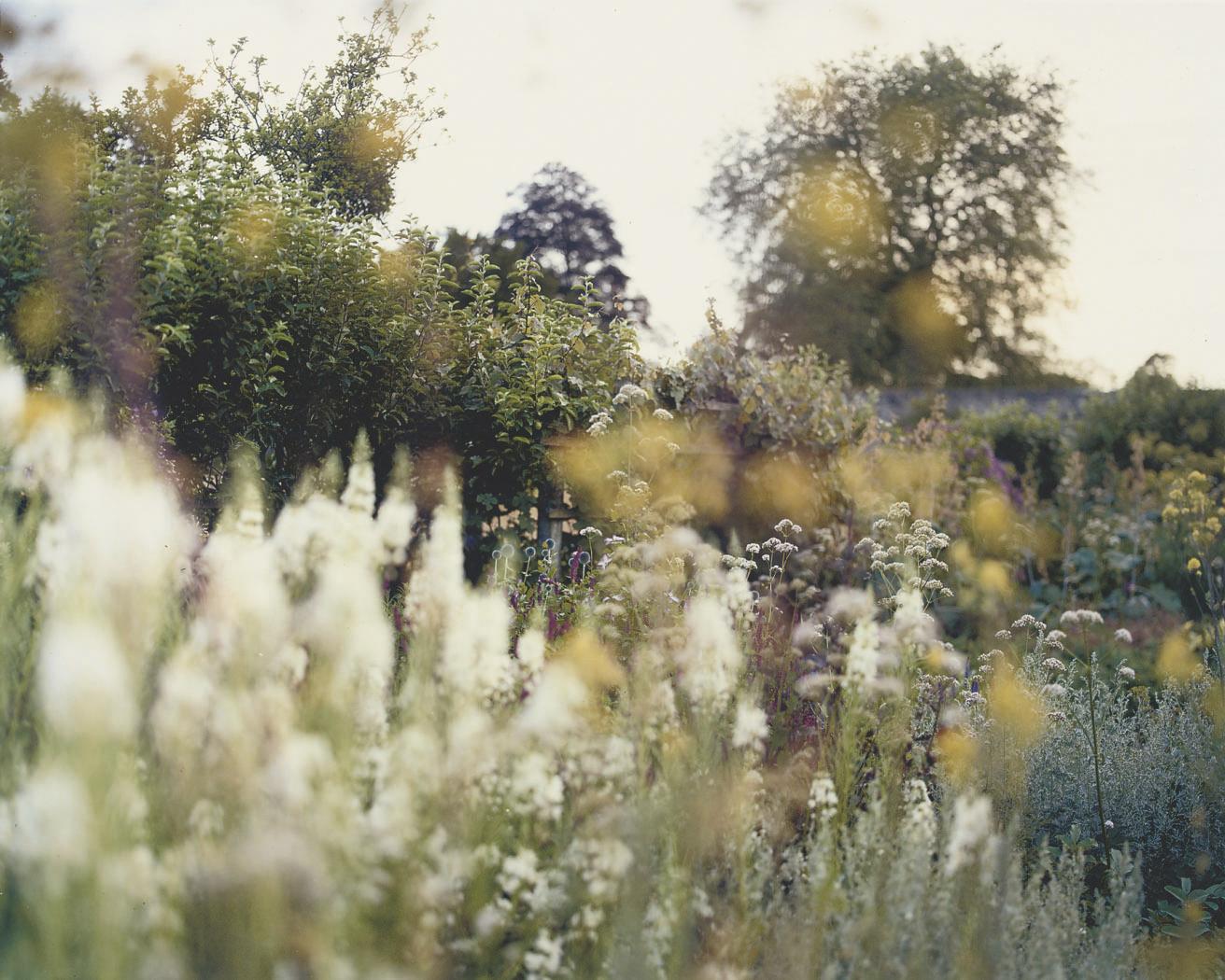 Blue boarder 1, walled garden, Parham House, 2009