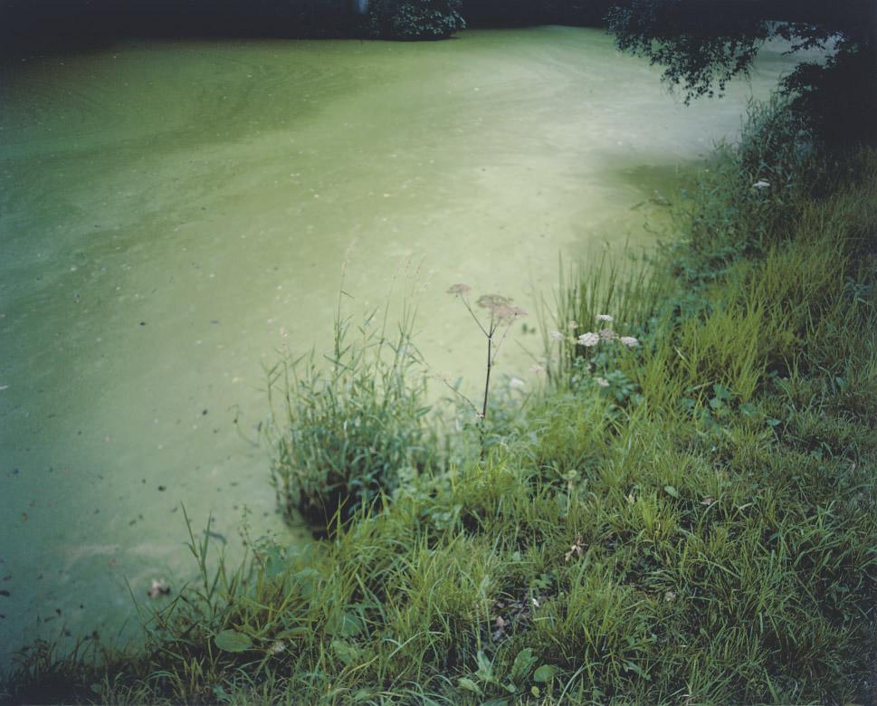 Weed, pike pond, Hodnet Hall, 2009