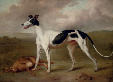 A prize greyhound in an extensive landscape