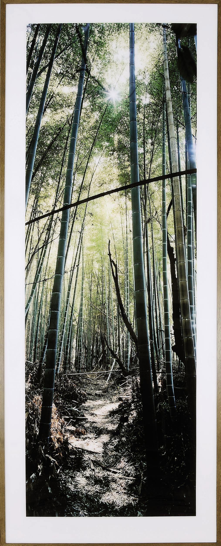 Bamboo Forest, Nara, Japan, 2000