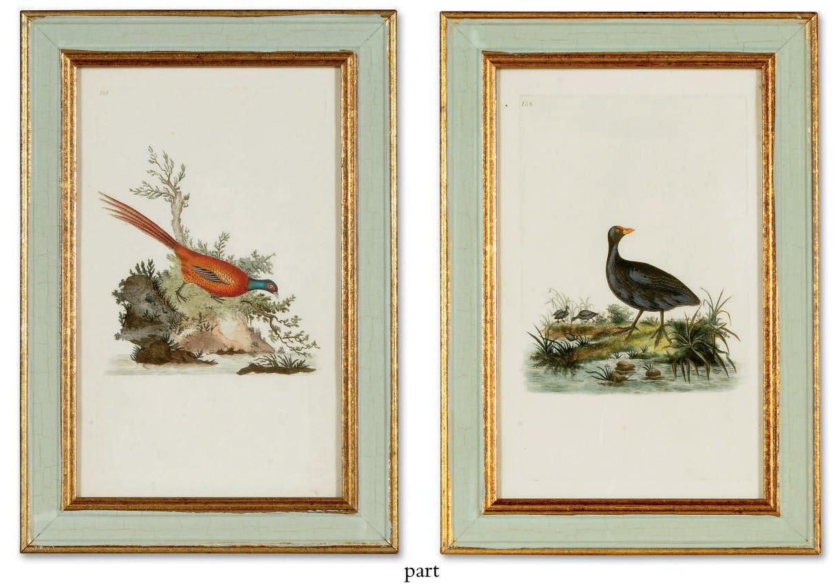 TWELVE HAND-COLOURED ENGRAVINGS OF BIRDS