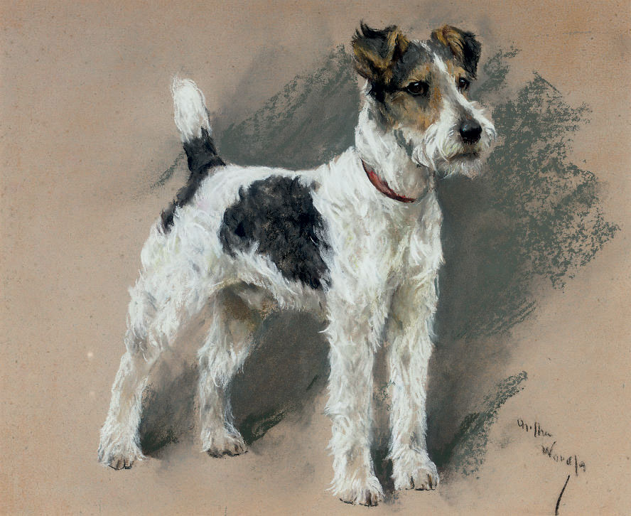 Study of a fox terrier