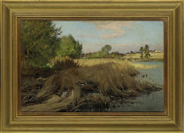 Ducks on a reedy river bank