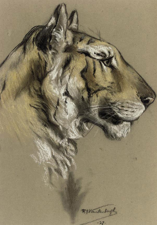 Study of a tiger head; and Study of a leopard head