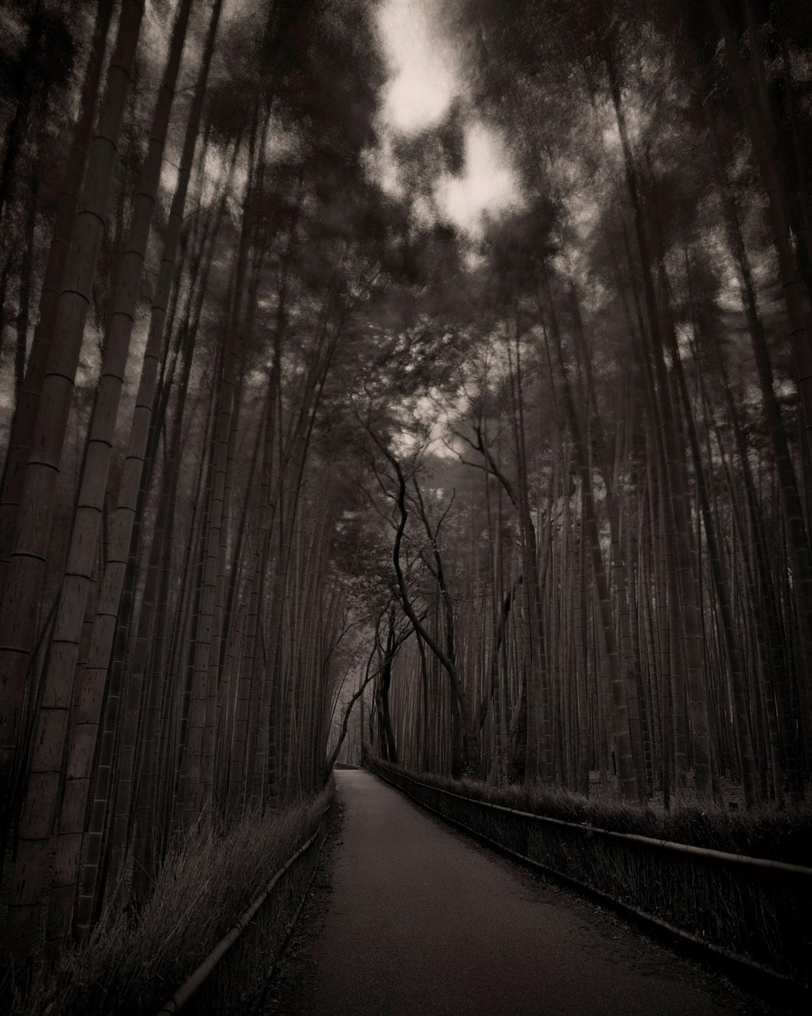 Kyoto Bamboo Path