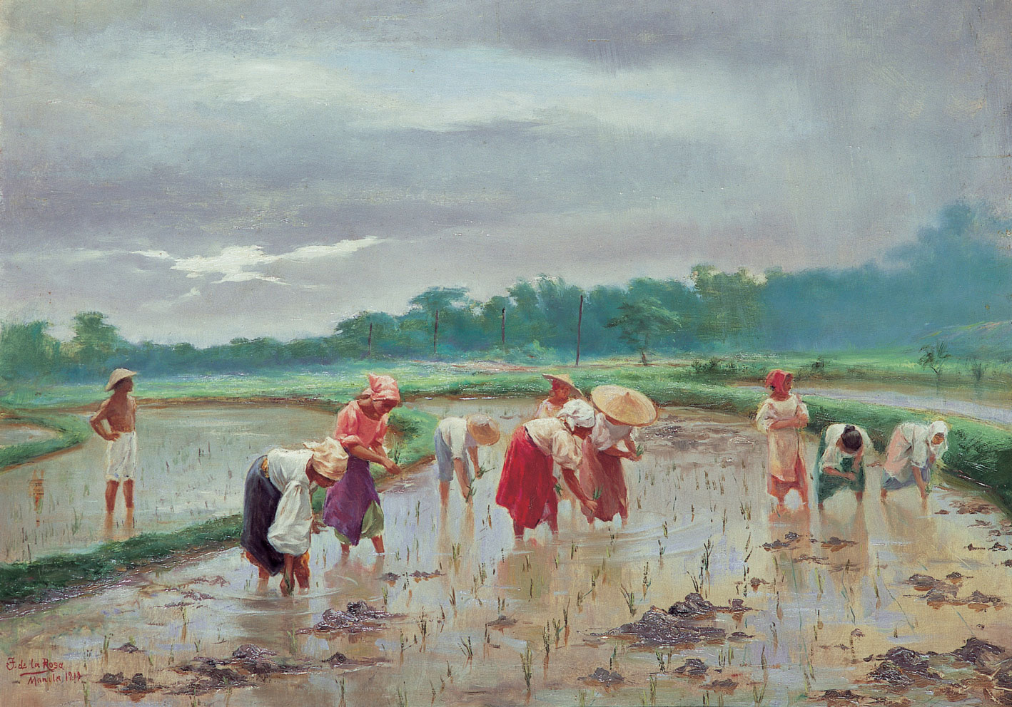 In the Rice Field