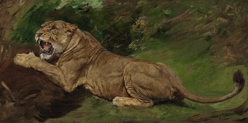 A lioness ready to pounce