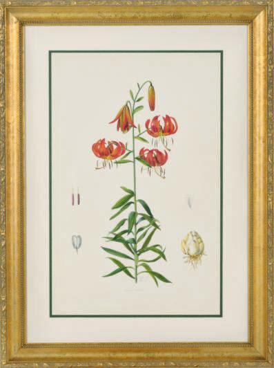 [Lillies]: Four Plates