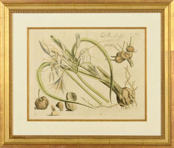 [Botanicals]: Six Plates