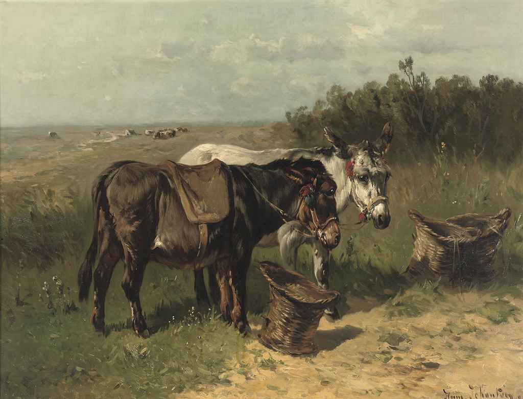 Donkeys in a field