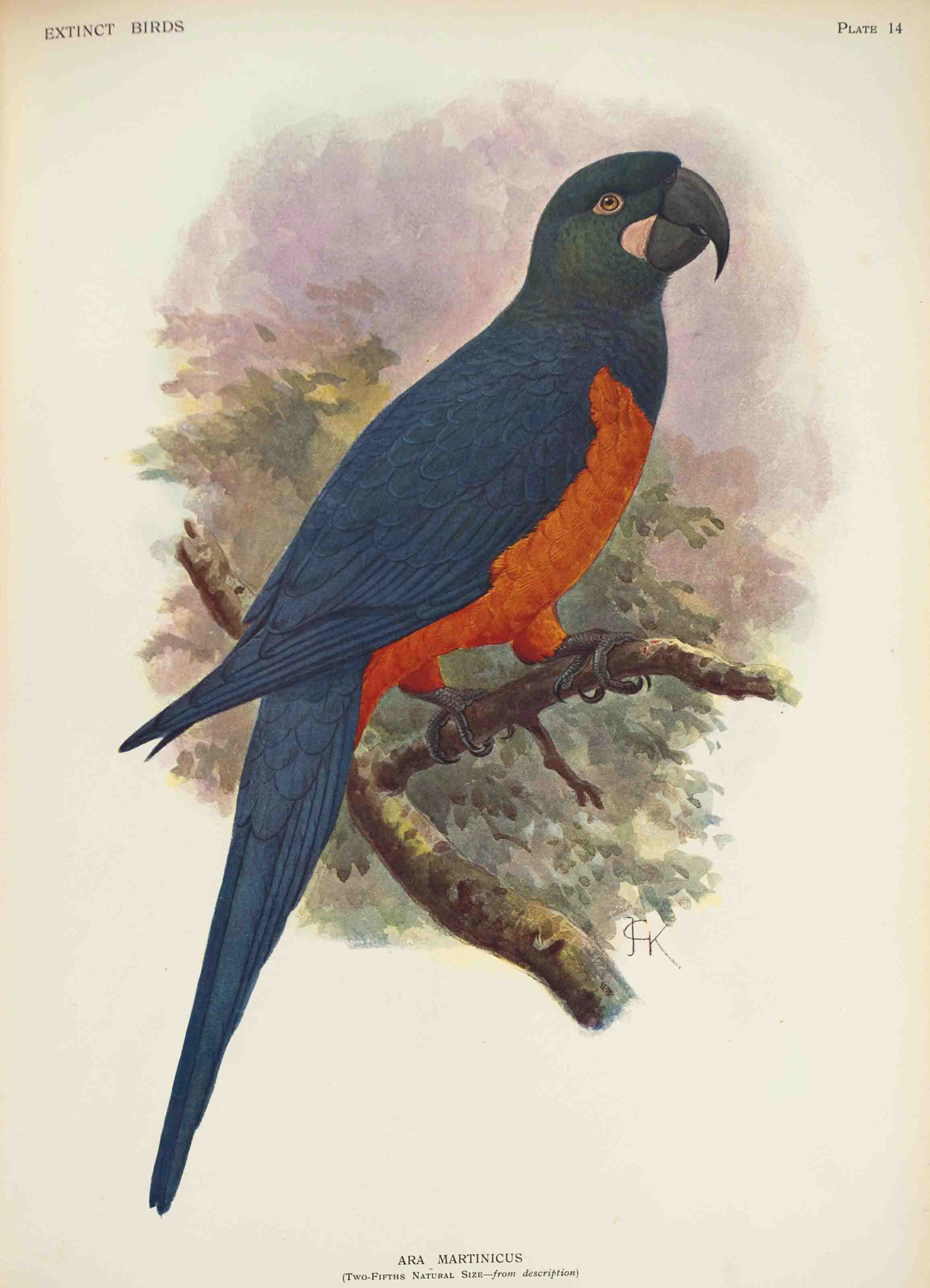 ROTHSCHILD, Lionel Walter, Baron (1868-1937). Extinct Birds. London: Hutchinson, 1907. 4° (374 x 280mm). Half-title, 45 chromolithographic plates after Keulemans, Lodge, H. Grönvold, J. Smit and F.W. Frohawk, and 4 uncoloured plates. (Light spotting to text and marginal on plates.) Contemporary green half morocco (extremities rubbed, spine sunfaded). Provenance: Walter Rothschild (1907 presentation inscription to:) -- N. Charles Rothschild (book label) -- Miriam Rothschild (1972 presentation inscription to:) -- Phyllis Thomas.
