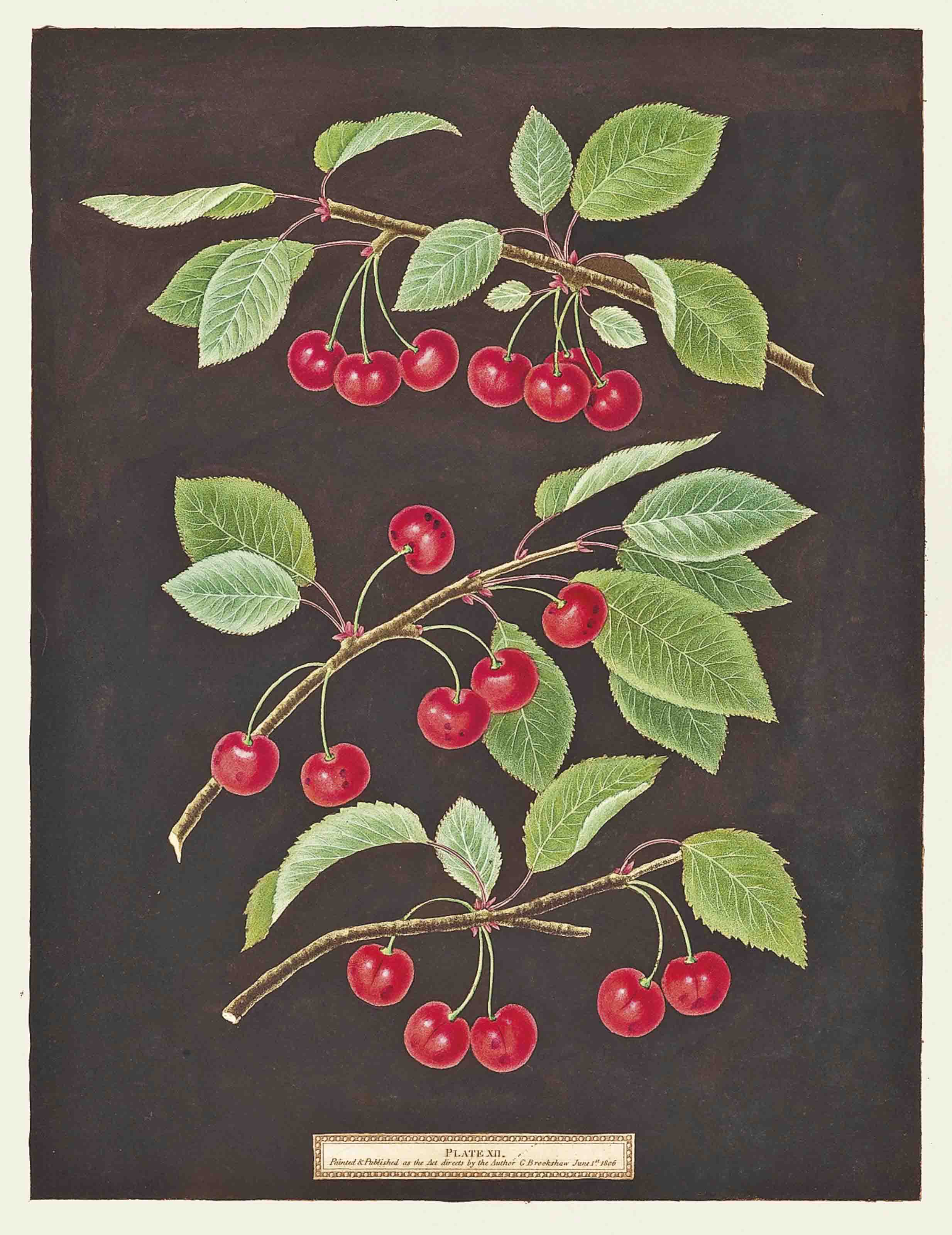 Kentish or Flemish Cherry, English Bearer, Carnation Cherry; Hautboy Strawberry, Chili-Strawberry, Alpine Red Strawberry, Scarlet Flesh Strawberry; Montauban Peach, Gross Minion, Royal George Old Peach; Black Apricot, Breda Apricot, Brussels Moor Park Apricot; Striped Holland Pippin, Marygold Apple, Sullenworth's Rennet Apple, Beauty of Kent; Gallande, La Teton de Venus, Noblesse Peach; Chaumontelle Pear, Windsor Pear, Summer Bon Chretien, French Summer Bon Chretien; and Common Damson, White Damson