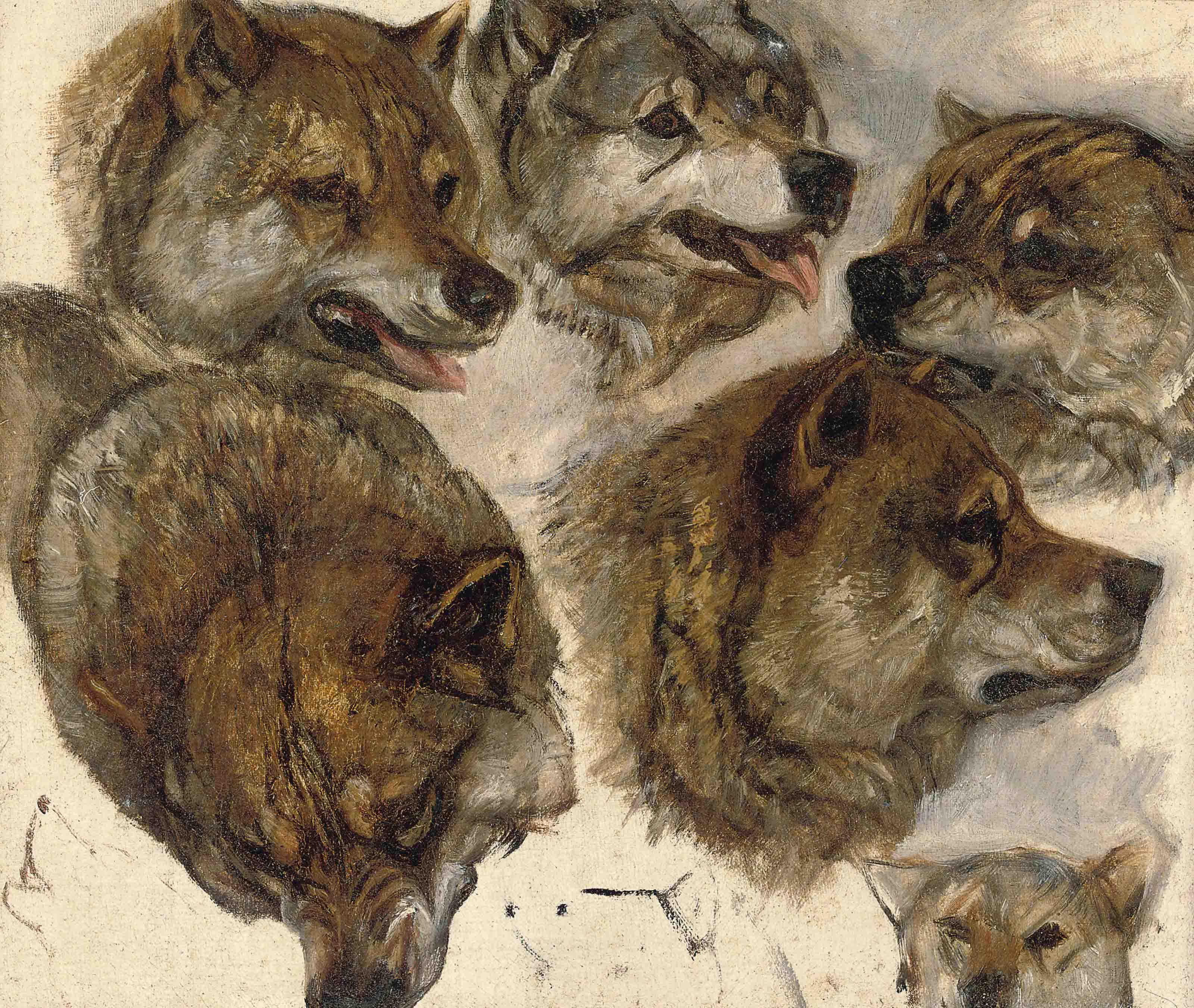 Study of huskies heads