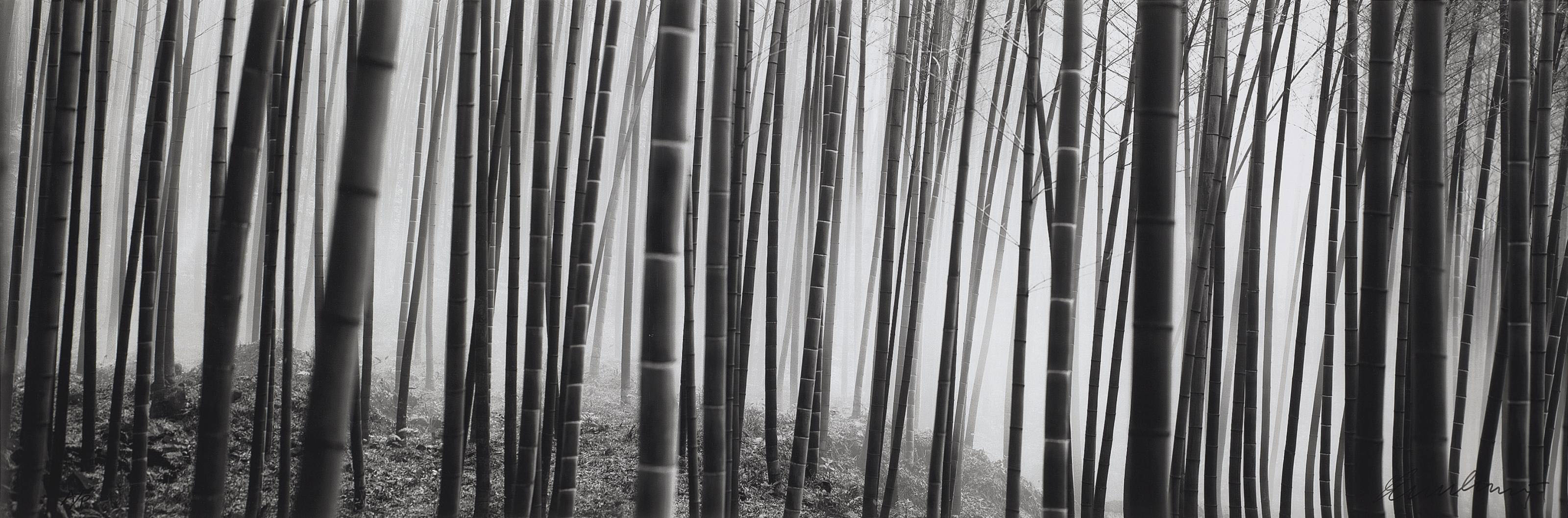 Kyoto Bamboo Forest, 2003