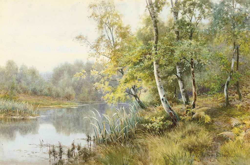 Silver birchs on a wooded river bank