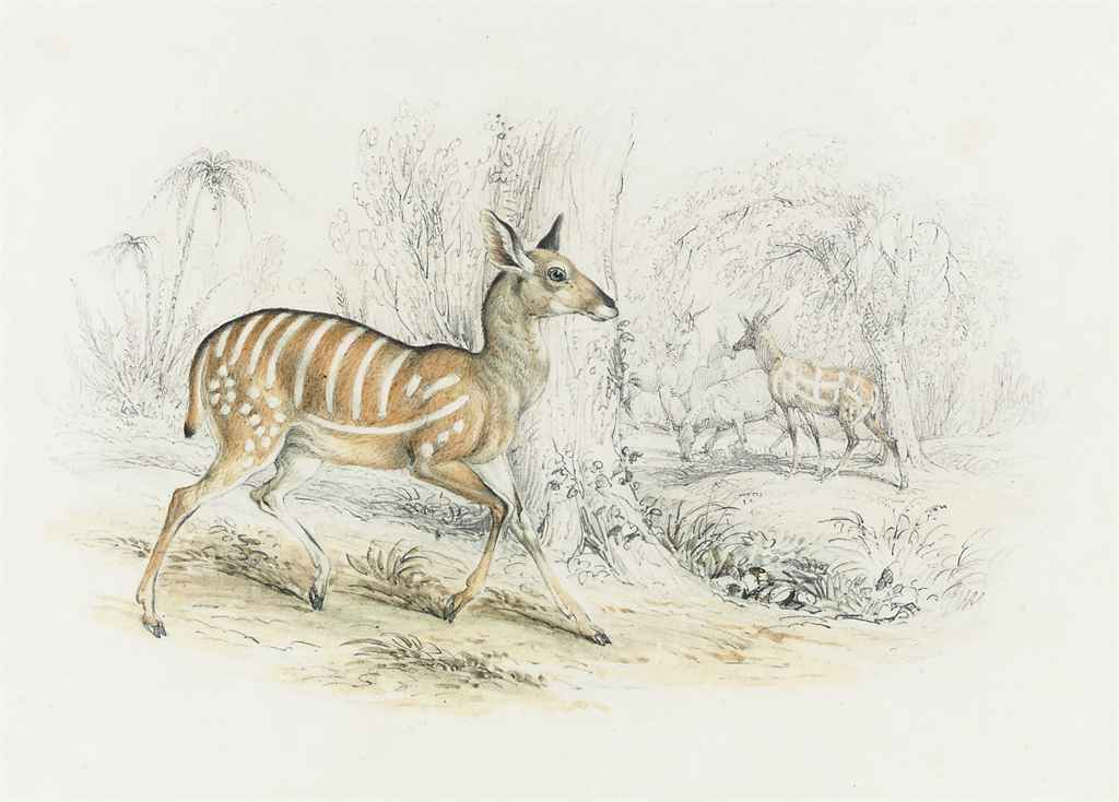 A striped antelope in a tropical landscape