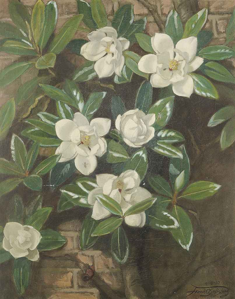 Magnolia (grown & painted by the artist)