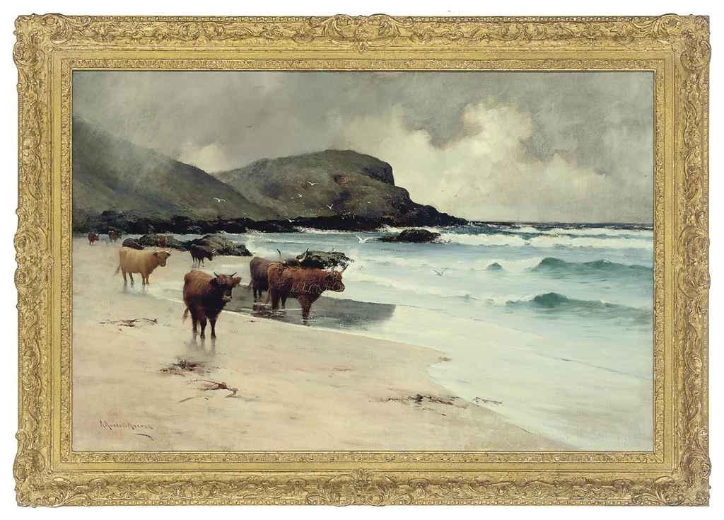 Highland cattle on a beach