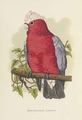 GREENE, William. Parrots in Ca