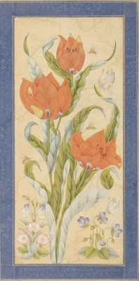 A STUDY OF TULIPS