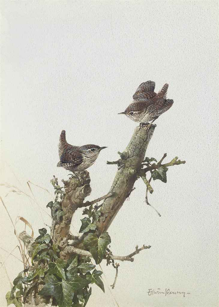 Two wrens perched on a tree stump