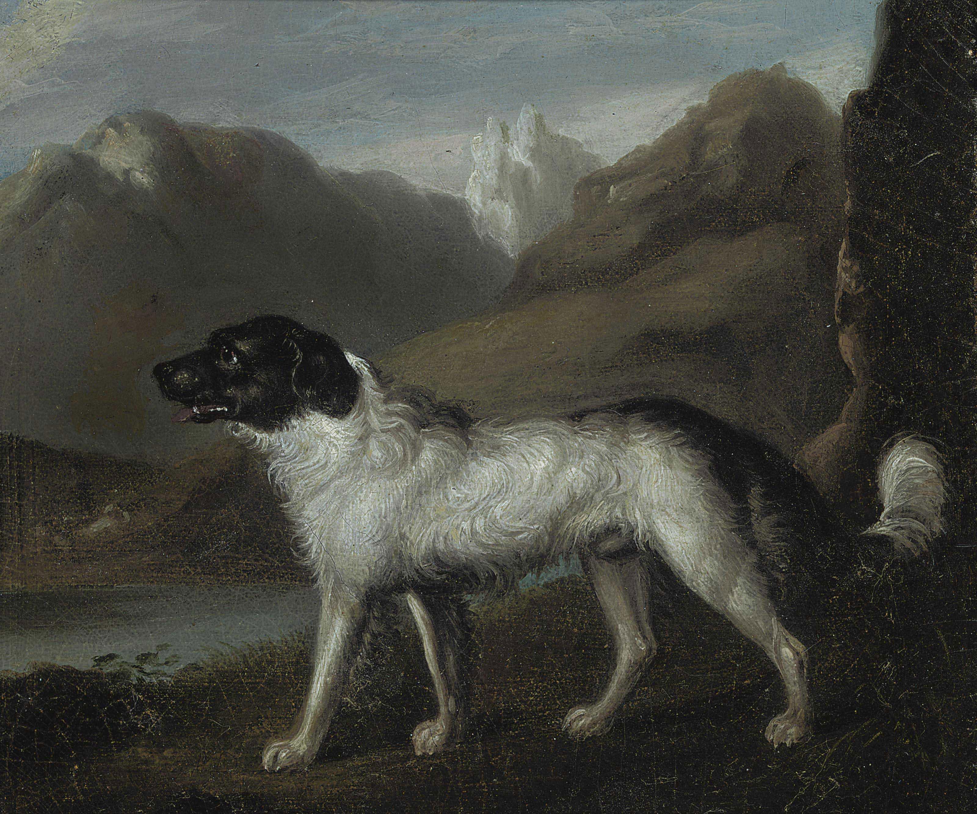 A mountain hound