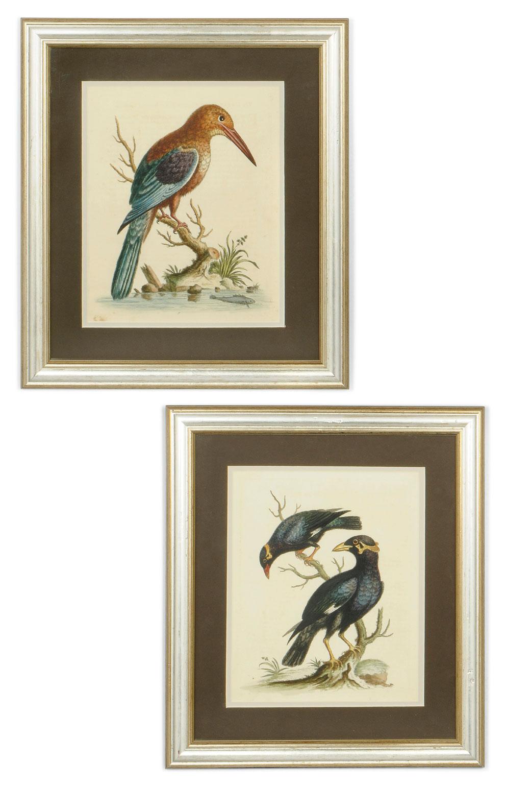 TEN COLOURED ENGRAVINGS OF BIRDS