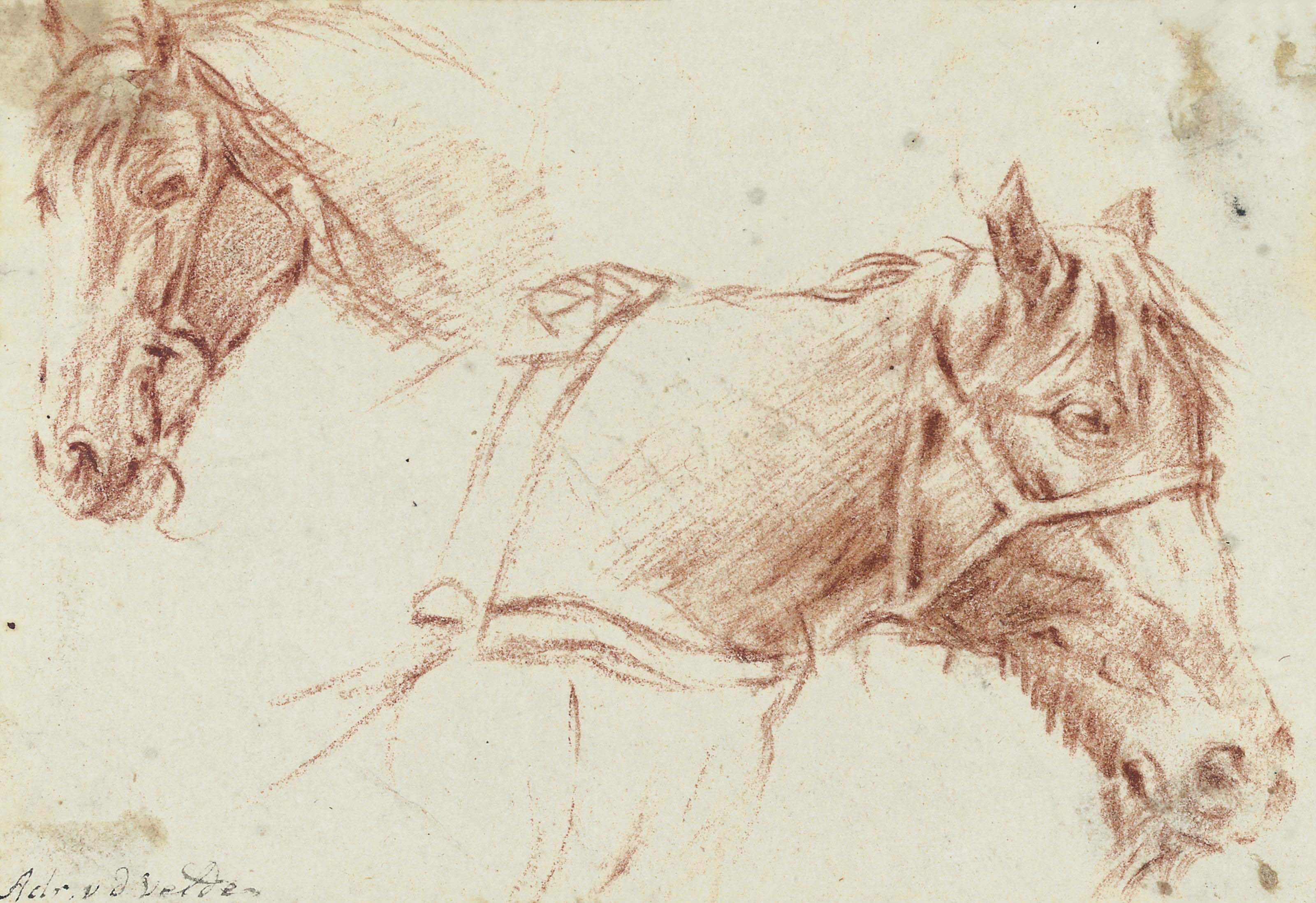 Two studies of the head of a horse