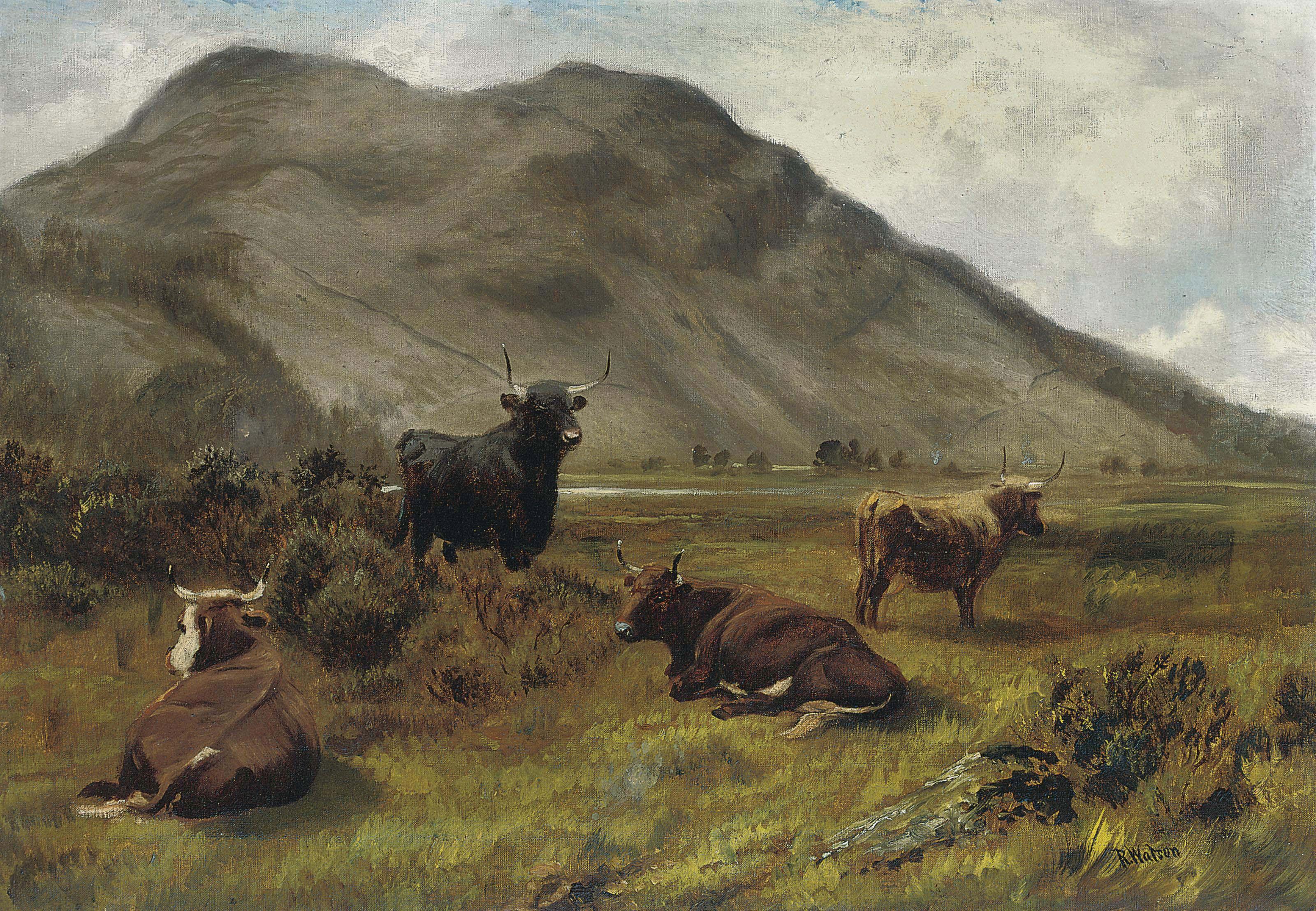 Cattle grazing in a highland landscape