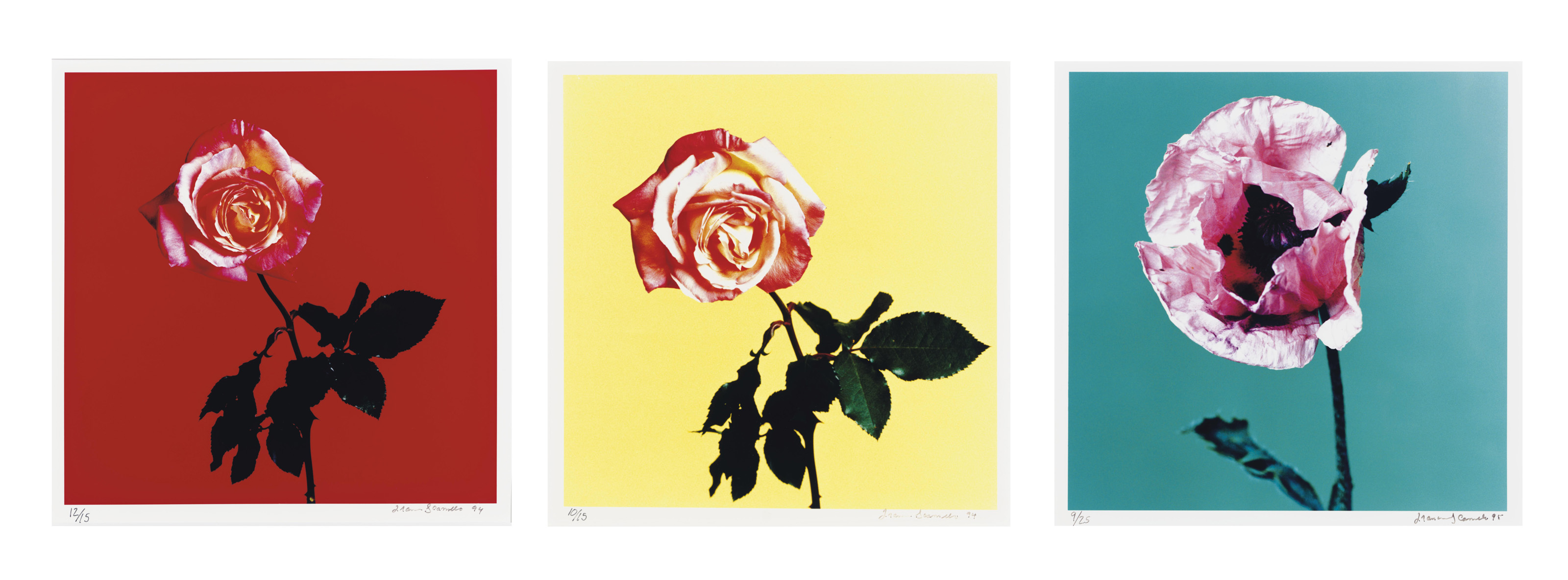Rose, 1994; Poppy, 1995; and Rose, 1994