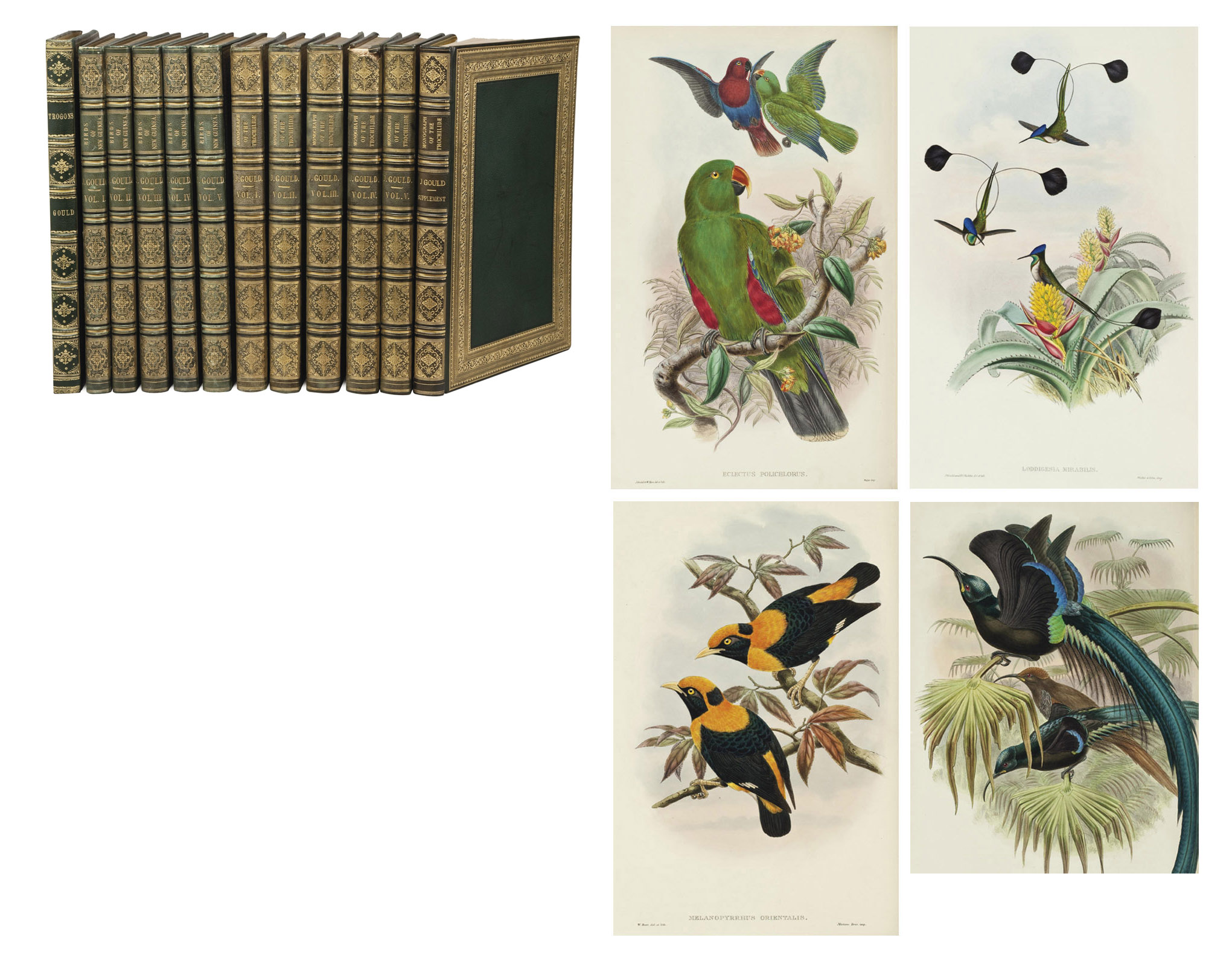 GOULD, John (1804-1881) & Richard Bowdler SHARPE (1847-1909). The Birds of New Guinea and the Adjacent Papuan Islands, Including Many New Species Discovered in Australia. Londres: Taylor & Francis pour Henry Sotheran & Co., 1875-1888.