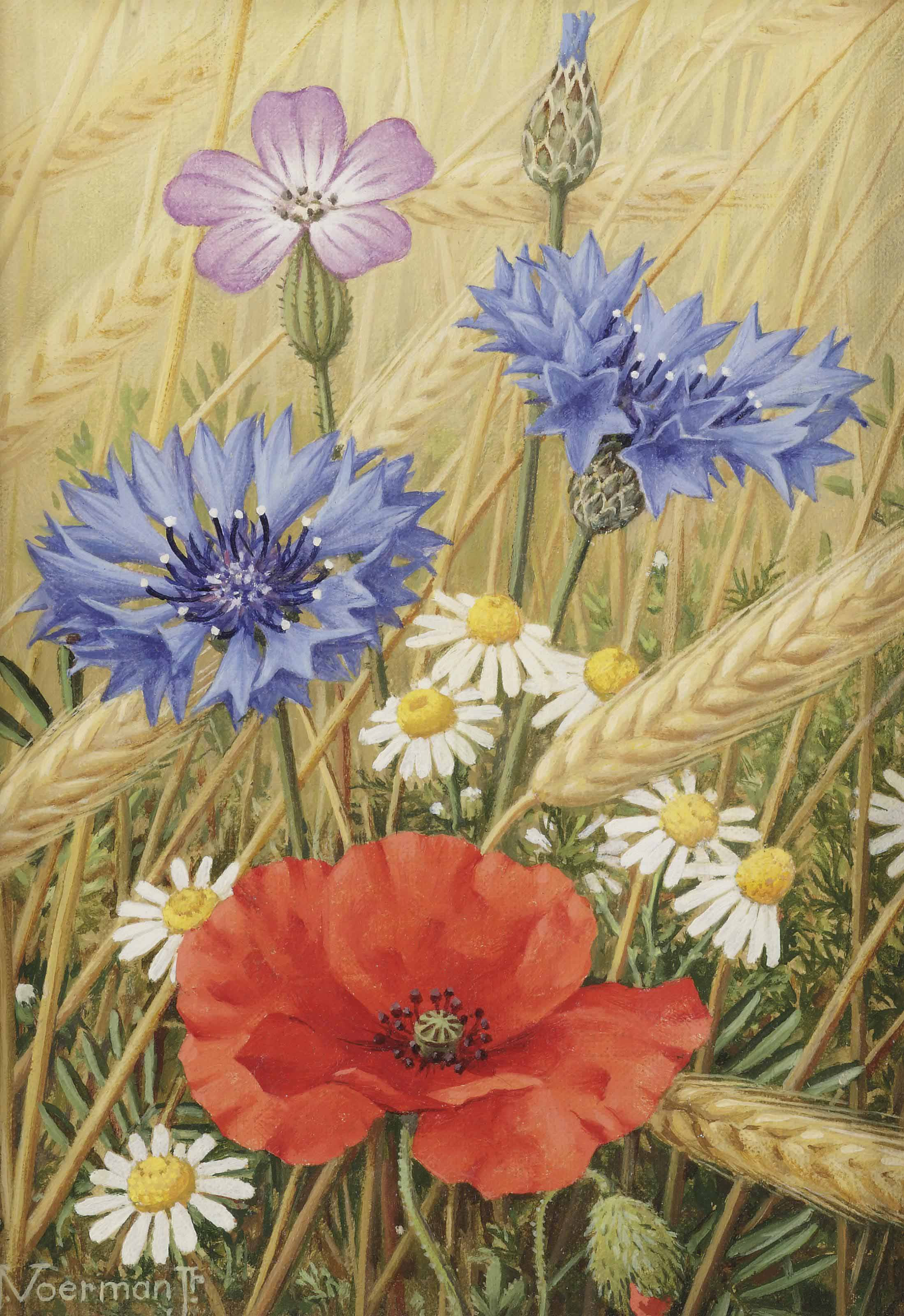 Cornflowers and poppies in a field