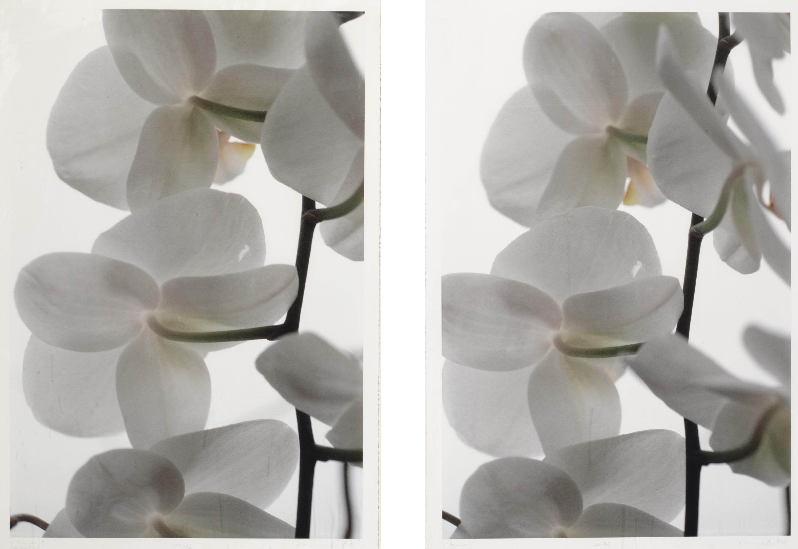 O.T. (orchideen) I (a diptych)